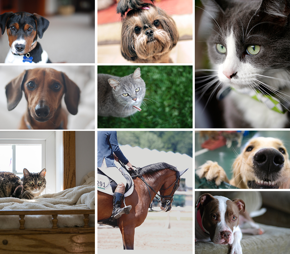 Pet Photography, Indianapolis
